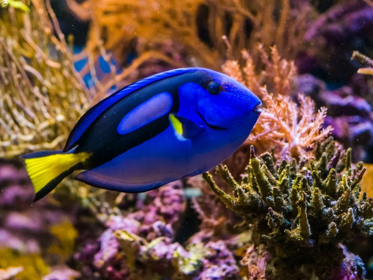 10 Ways To Lower Nitrates In An Aquarium