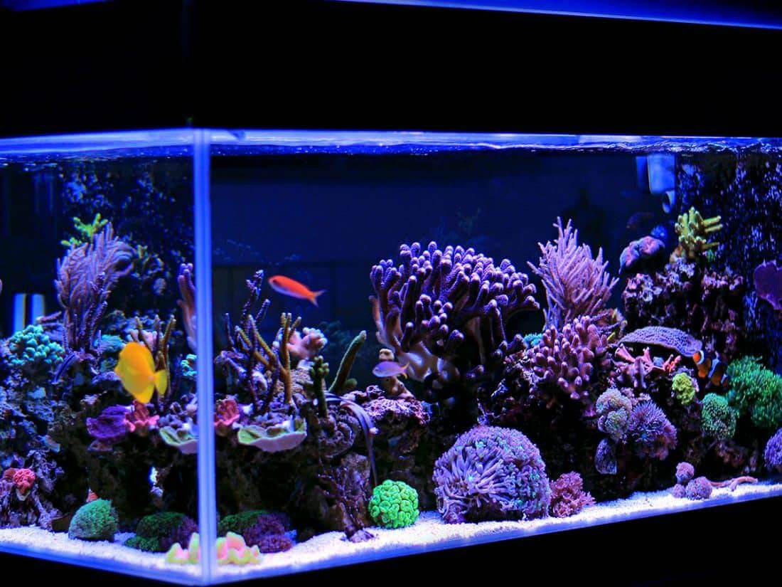 saltwater aquarium kits