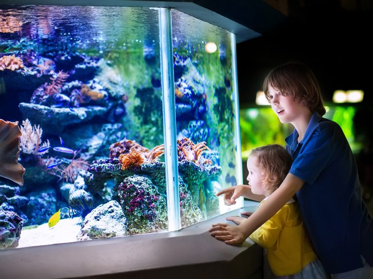 Create The Custom Aquarium Of Your Dreams With These Ideas