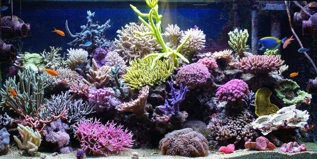 saltwater vs freshwater aquariums