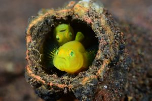 Do You Know What Google Underwater Street ViewIs? Check This Out.