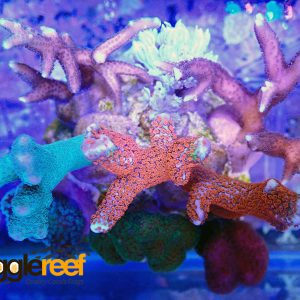Coral Garden 8 Mixed Coral Bundle