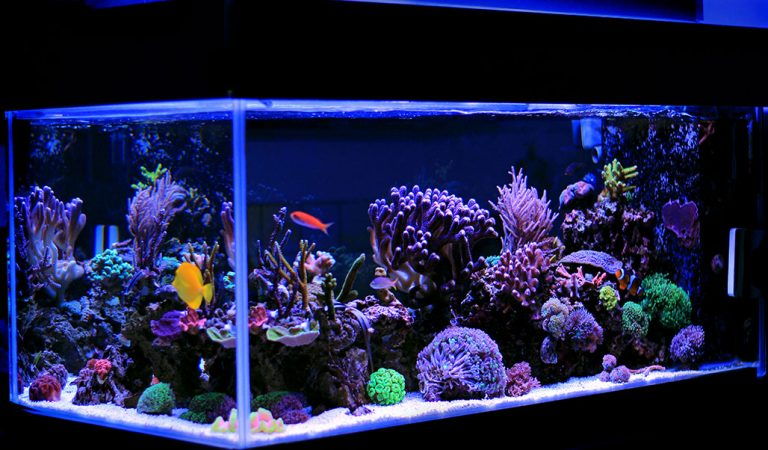 How To Set Up A Saltwater Marine Aquarium