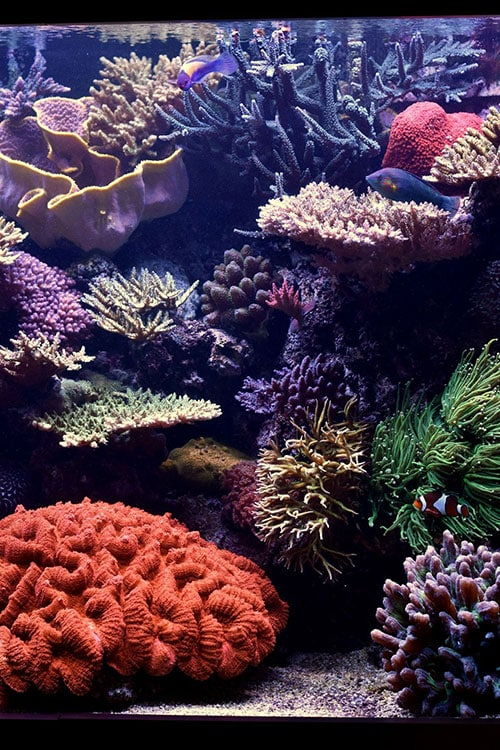 Daytime Natural Look Of Corals And Fish